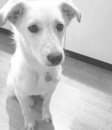 Elsa mit ca. 5 Monaten